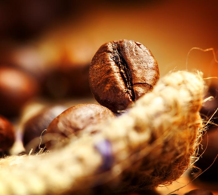 Coffee bean, macro